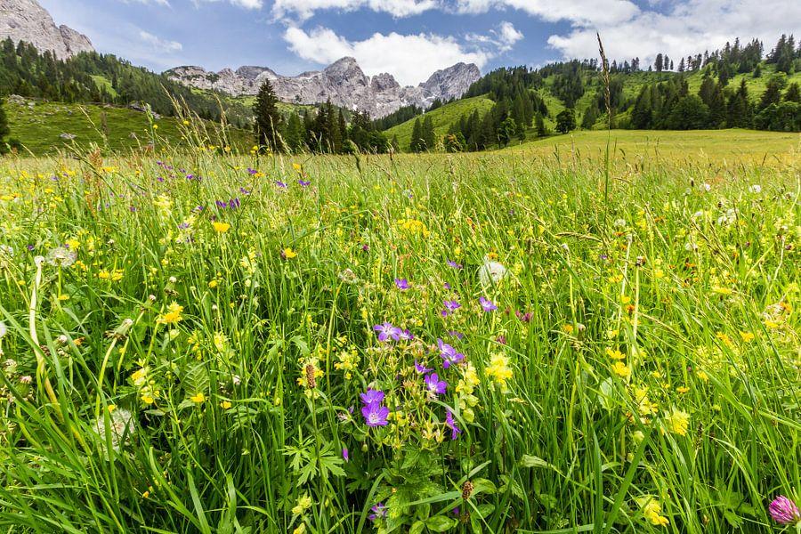 Bloemenweide in de bergen