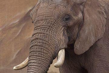 olifant sur anja voorn