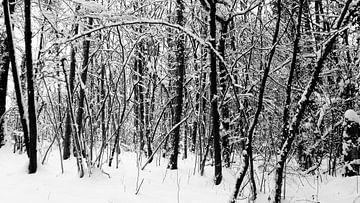 2017 art 2 bosrand in de sneeuw Chirmont Belgie van jan kamps