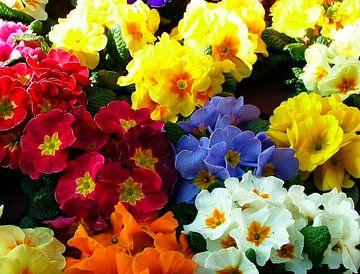De bloemenkraam von Andrea van Zwol