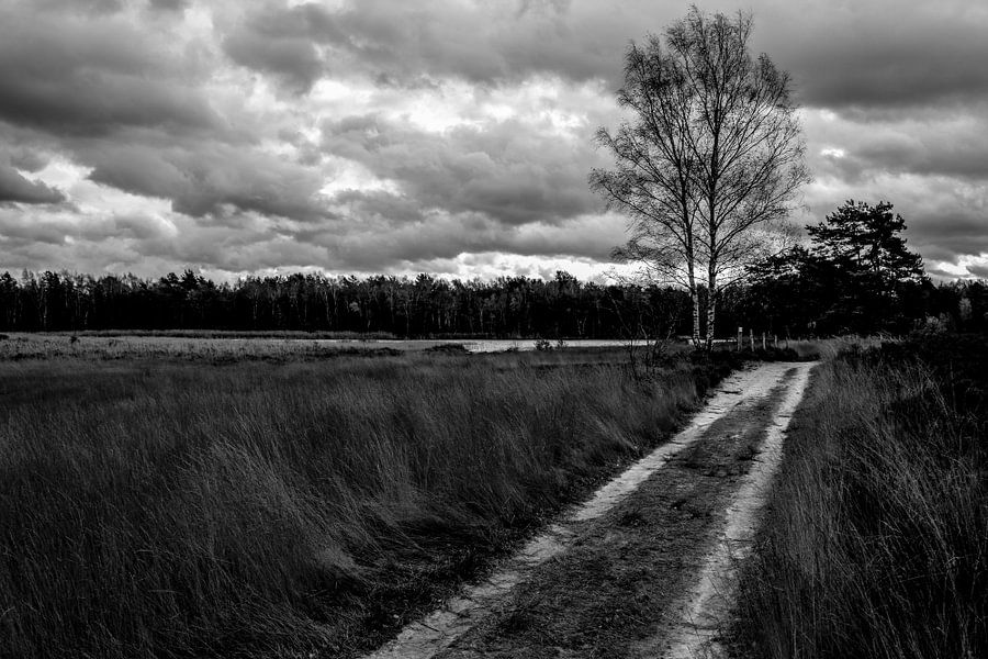 Heide.