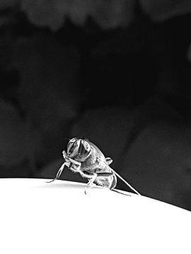 Vlieg in black and white van Joelle van Buren