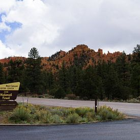 Dixie National Forest  van Jeroen Götz