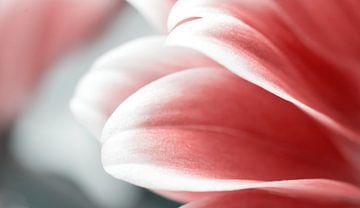 Rode bloemblaadjes van