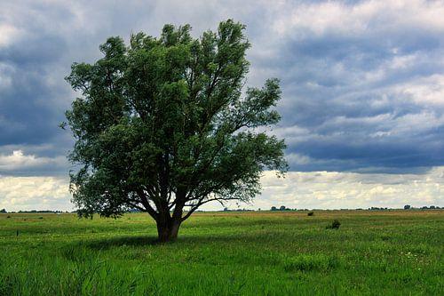 Solitaire boom in grasland