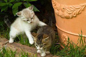Jonge kat, kitten, poes,