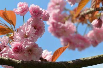 Frühlingserwachen von zwergl 0611