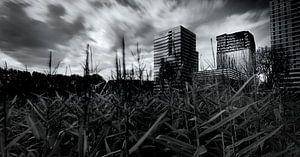 Maisveld op de Zuidas van Amsterdam van Mark den Hartog