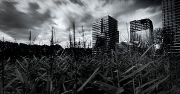 Maisveld op de Zuidas van Amsterdam von Mark den Hartog