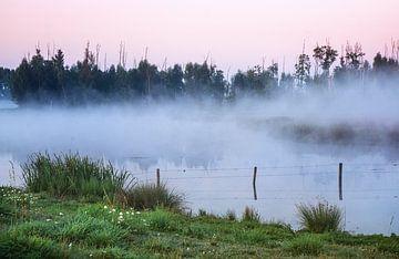 Nebel zwischen den Bäumen von natascha verbij