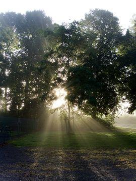 Sonnenaufgang im Herbst von joyce kool