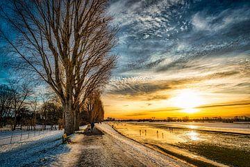 Winterlandschap met boom en sneeuw en wolkenformatie bij zonsondergang aan de Rijn bij Düsseldorf van Dieter Walther
