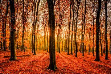 Beukenbos in het Leuvenumse Bos tijdens de herfst. van Sjoerd van der Wal