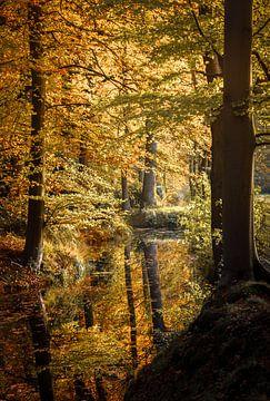 Herbstwald im Spiegel von Yvonne Albe