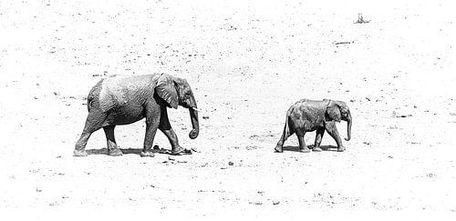 Olifanten lopen over het zand