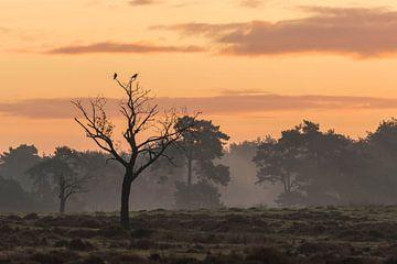 Sonnenaufgang mit zwei Krähen von Ans Bastiaanssen