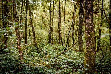 groen bos van claes touber