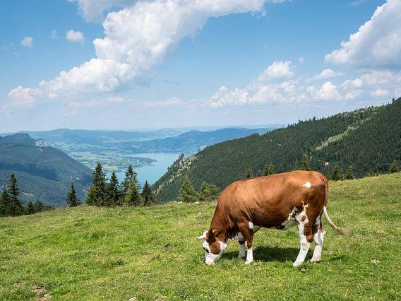 Koe op een bergweide in het Salzkammergut