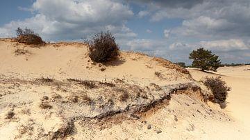 Zandverstuiving met boompjes van Dick Doorduin