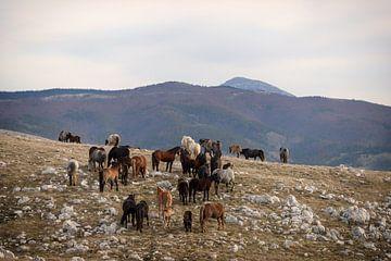 Frei lebende Pferdeherde in den Bergen Bosniens von Annett Mirsberger