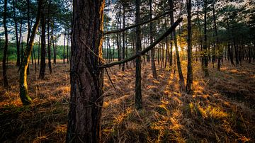 Brabantse bossen van Wim Schuurmans