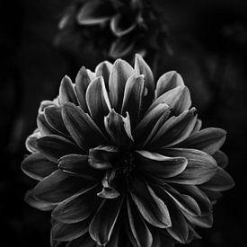 Une fleur dans la lumière sur Thilo Wagner