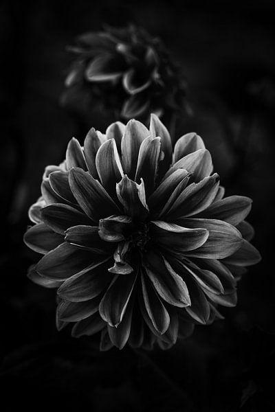 Blume im Licht von Thilo Wagner