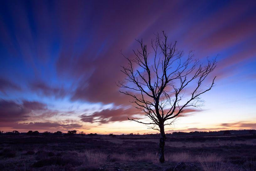Strabrechtse Heide 201 van Desh amer