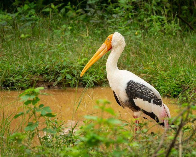 Vogel im Dschungel von Nicole Nagtegaal