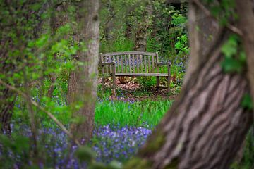 bankje in het bos van Ed Dorrestein