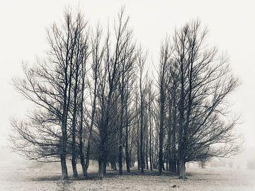 Melancholie von BHotography