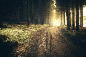 Bospad in de donkere Harz met gouden zonsopgang van Oliver Henze