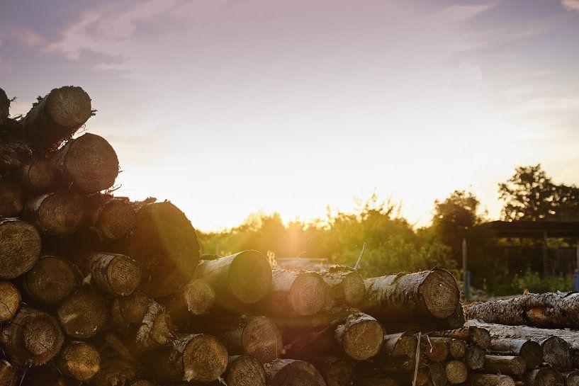 Sunset Logs von Richard Schröder
