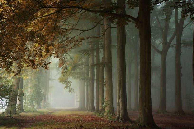 Autumnal Bliss. van Inge Bovens