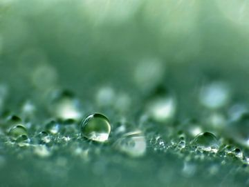 Water-Nevelen (Druppel in Petrol) van Caroline Lichthart