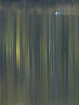 Brilduiker met reflectie van bos van Erik van Velden