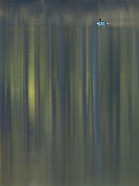 Brilduiker met reflectie van bos