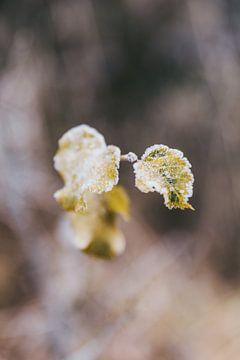 Bevroren herfstbladeren van Jessie Jansen