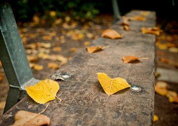 Herfstbladeren van David Dirkx