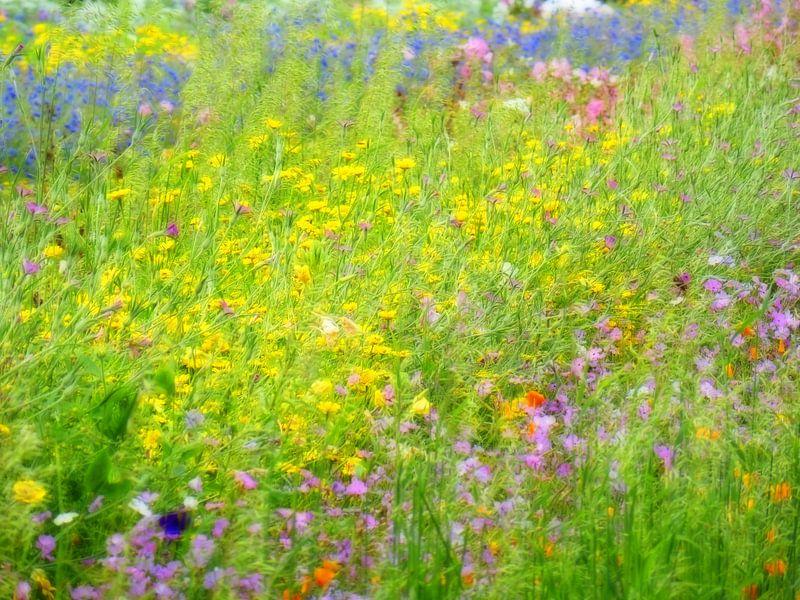 De weelderige bloementuin van Jessica Berendsen