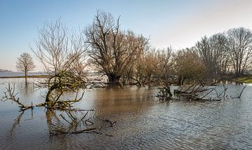 Ondergelopen uiterwaarden van de Nederlandse rivier de Waal van Ruud Morijn