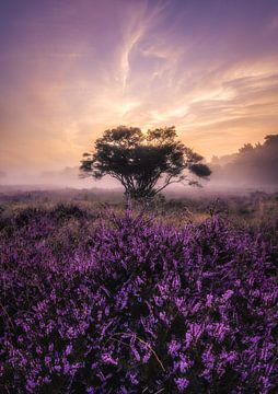 Heide zonsopkomst_II