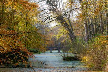 Herfst in Bergen van René Groeneveld