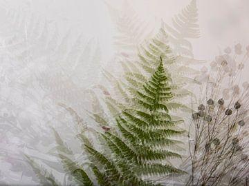 Collage mit Farn, Mehrfachbelichtungen von Guido Rooseleer