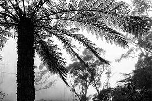 Regenwoud in de mist VI