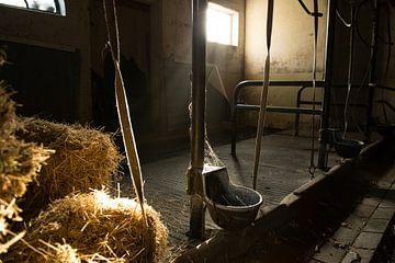 Oude koeienstal van