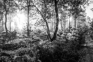 Ochtend in het bos van MICHEL WETTSTEIN