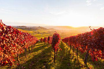 Wijngaarden in Stuttgart van Werner Dieterich