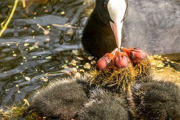 babies hebben honger van claes touber