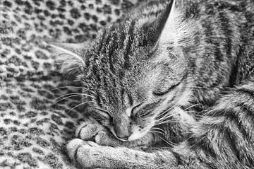Tiger auf Panther von Jo Beerens